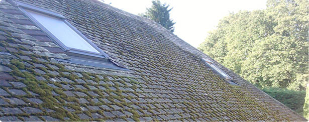 Moss Removal in Malvern